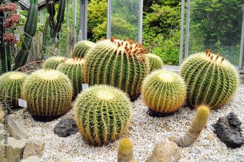 In de dag Cactus サボテン