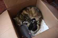 Homeless Cat With Kittens In A Box In The Street.
