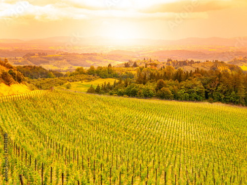Vineyards of Chianti. Warm sunset in beautiful Tuscan landscape, Italy.