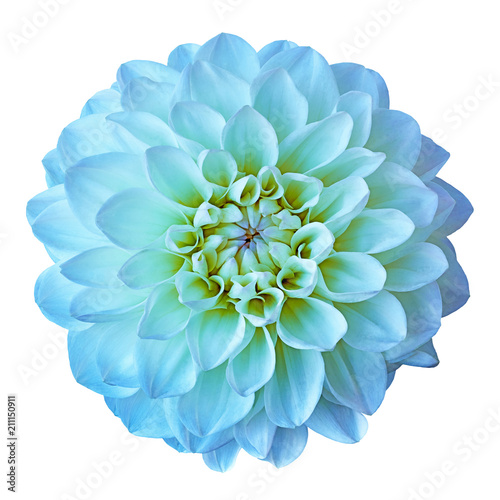 Flower cyan yellow dahlia isolated on white background. Close-up. Element of design.