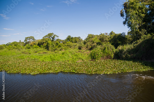 Fotografija  Beautiful image of the Brazilian wetland, region rich in fauna and flora