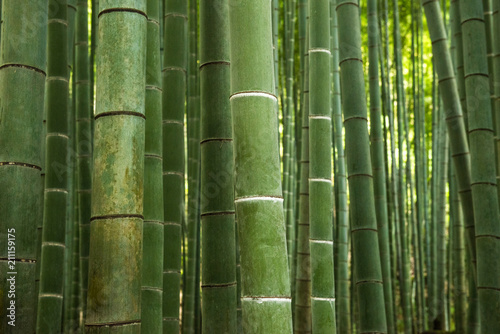 Spoed Foto op Canvas Bamboo Bamboo forest, Japan
