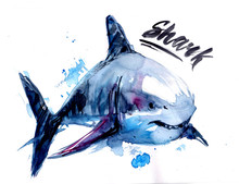 Watercolor Shark