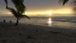 Still: Two Dogs Running at the Seashore of Rarotonga