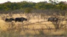 View Of Rhinos Through Trees, Namibia