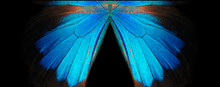 Blue Abstract Pattern. Wings O...