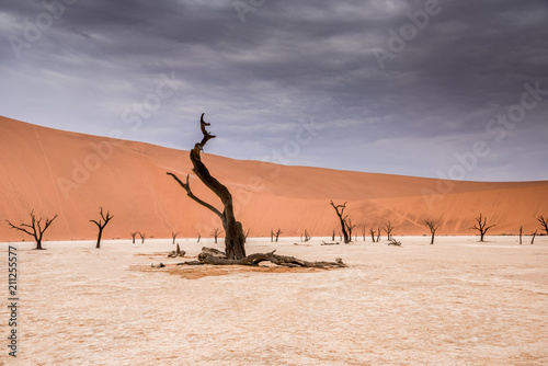 Fotografie, Obraz  Sossusvlei Namibia