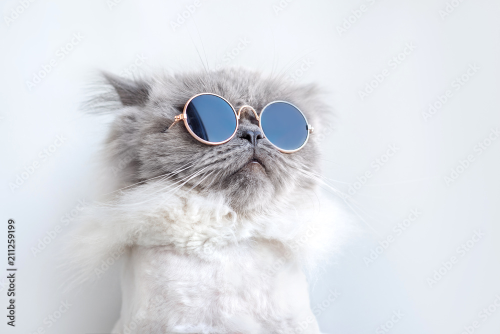 Fototapety, obrazy: funny cat portrait in sunglasses