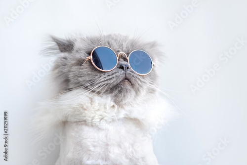 Poster de jardin Chat funny cat portrait in sunglasses