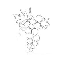 One Line Drawing Grape Sketch Isolated On White Background.