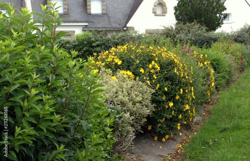 haie de plantes fleuries,jardin de maison – kaufen Sie dieses Foto ...