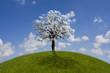 Baum auf grüner Wiese unter blauem Himmel
