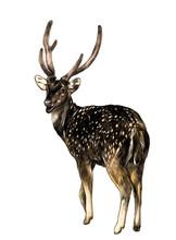 Spotted Deer Stands Full-lengt...