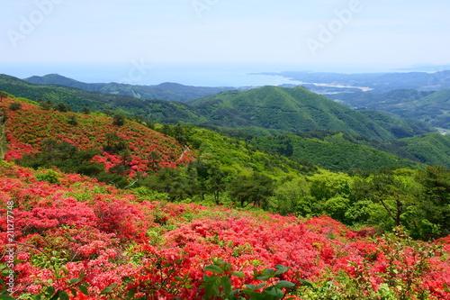Foto op Canvas Azalea ツツジの季節、初夏の徳仙丈山からの南三陸海岸。気仙沼 宮城 日本。5月中旬。