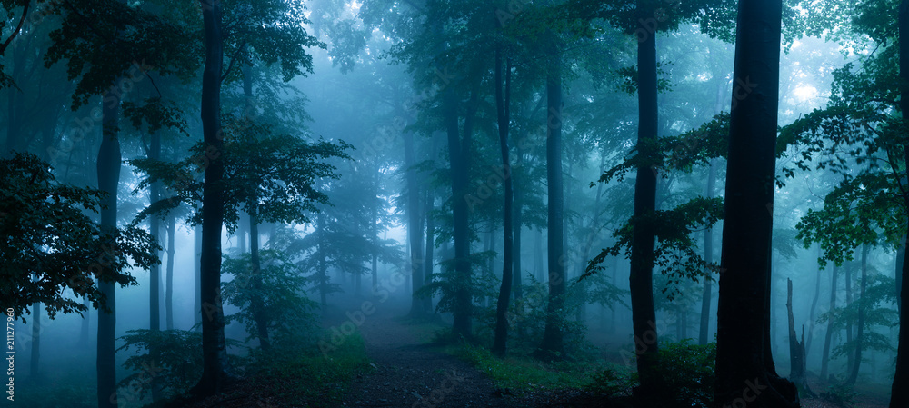 Fototapeta Panorama of foggy forest. Fairy tale spooky looking woods in a misty day. Cold foggy morning in horror forest