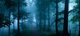 Fototapeta Las - Panorama of foggy forest. Fairy tale spooky looking woods in a misty day. Cold foggy morning in horror forest
