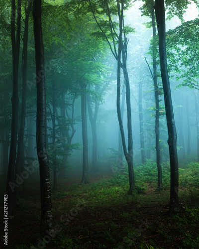Papiers peints Forets Spooky light in blue foggy forest with greeen vegetation. Autumn misty morning in the woods. Horror forest