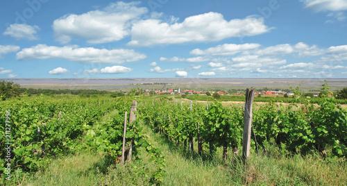Blick Auf Den Weinort Mörbisch Am See Am Neusiedlerseeburgenland