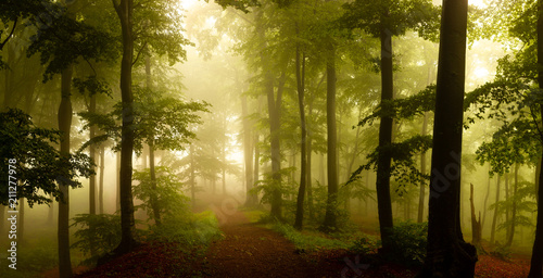 Keuken foto achterwand Bossen Panorama of foggy forest. Fairy tale spooky looking woods in a misty day. Cold foggy morning in horror forest