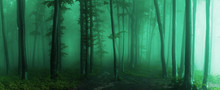 Panorama Of Foggy Forest. Fair...