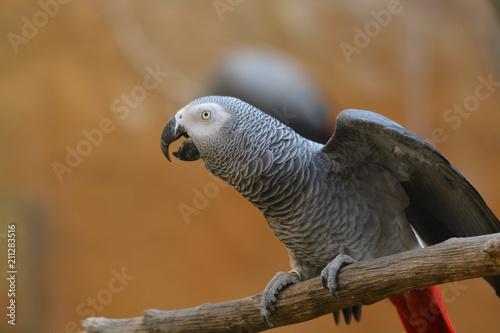 Foto op Plexiglas Papegaai oiseau perroquet seul perché sur sa branche en couleur en plan rapproché