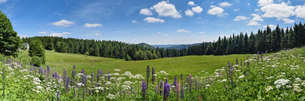 Fototapety, obrazy: Thüringer Wald im Sommer mit Bergwiese