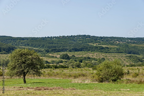 Foto op Aluminium Pistache Landscape of summer nature with green glade, forest and big single tree, Sredna Gora mountain, Ihtiman, Bulgaria