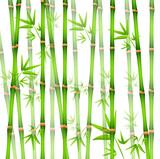 Fototapeta Sypialnia - Vector Illustration of Background with realistic Bamboo