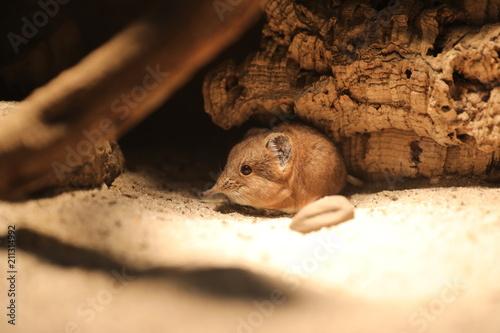 Fotografie, Obraz Mouse