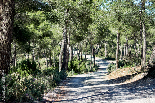 Photo sur Aluminium Olive Path through the forest in the mountains of Ibiza. Spain