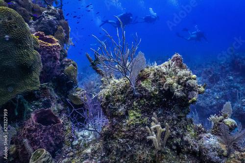 Tuinposter Koraalriffen Purple under water coral