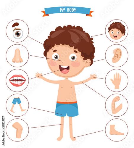 Fototapeta Vector Illustration Of Human Body