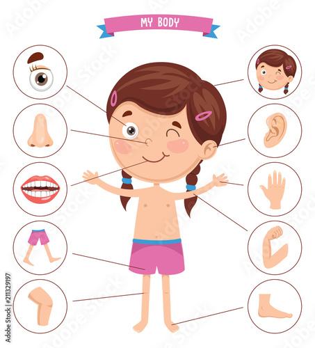 Obraz na plátně Vector Illustration Of Human Body