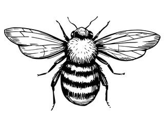 Skica za pčele. Ručno nacrtana ilustracija pretvorena u vektor