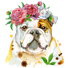 Watercolor Portrait Of Bulldog