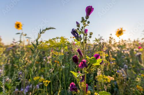 Photo Blumenwiese in Rheinhessen an einem Sommerabend