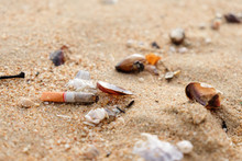 Cigarette Butts And Shells On ...