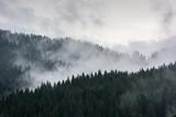 Mglisty Las Sosnowy. Gęsty las sosnowy w porannej mgle. - 211362198