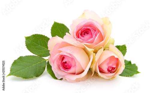 Foto auf Leinwand Roses Beautiful pink roses.