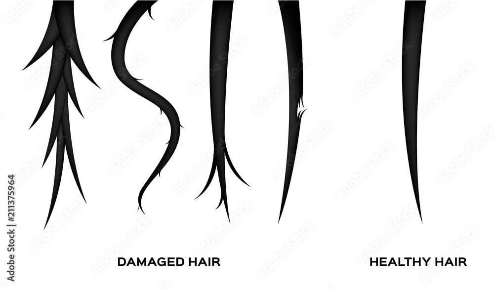 Fototapeta damaged hair and normal hair