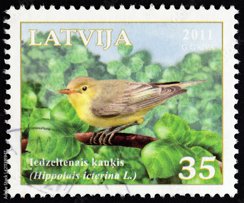 Fotografia  Icterine warbler, Hippolais icterina (Latvia 2011)