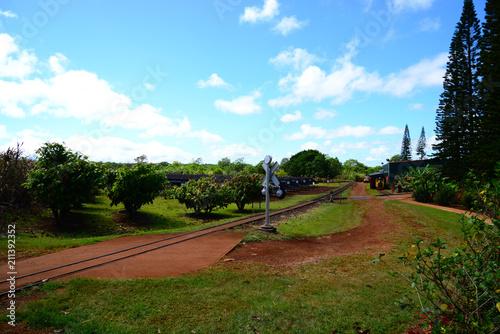 Foto op Aluminium Spoorlijn 農園と線路