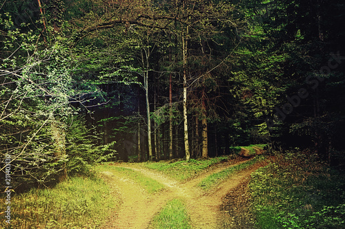 Fotografie, Obraz  two divergent paths in the wood, Bavarian countryside
