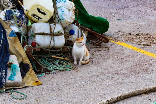 Valokuva  Gato sucio