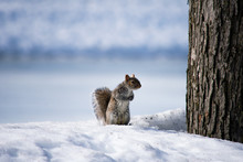 A Squirrel Sitting In The Snow...