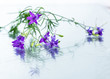 Rosemary herb purple flowers on glass background. Healthy organic nature plant.