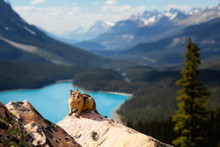 Chipmunk Sitting On Top Of A Rock With Beautiful Canadian Rockies In The Background. Taken At Peyto Lake, Banff National Park, Alberta, Canada.