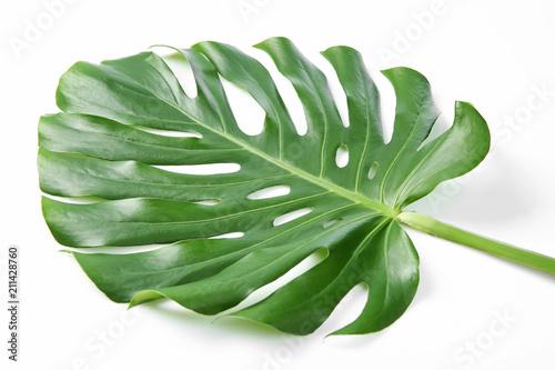 Fototapety, obrazy: Tropical Monstera leaf on white background