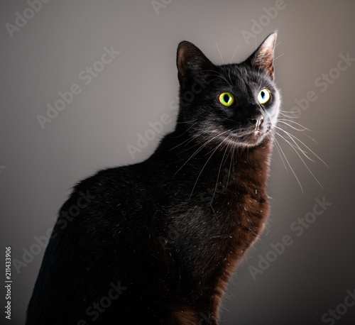 Fotomural A dignified black cat with yellow green eyes sits for a portrait against an isol