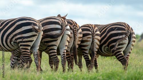 Fotobehang Zebra zebra herd, Africa
